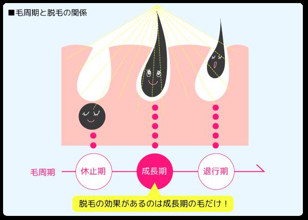 毛周期と脱毛の関係「脱毛効果があるのは成長期だけ」